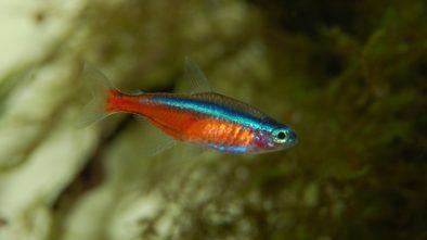 Ryby do akvária