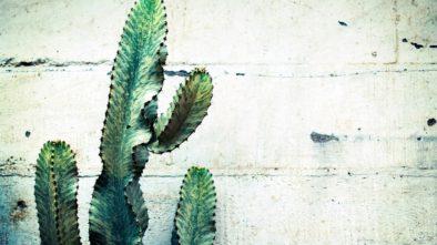 Péče o kaktus