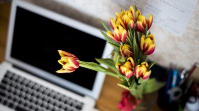 Kancelář bez květin není kancelář. Jaké do ní patří?